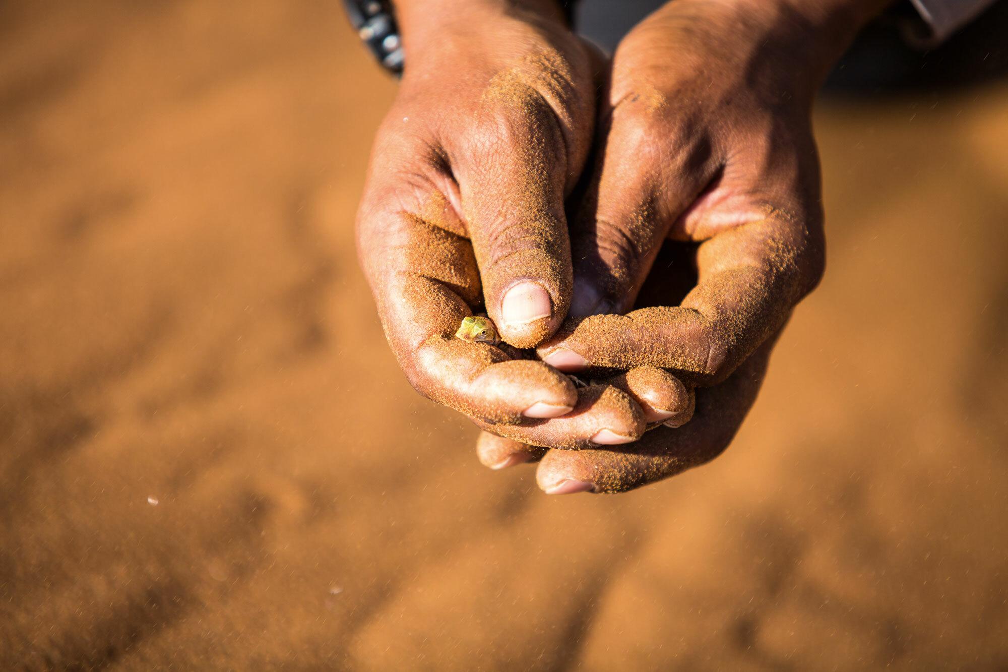 Durch die Wüste – Trekking Namibia