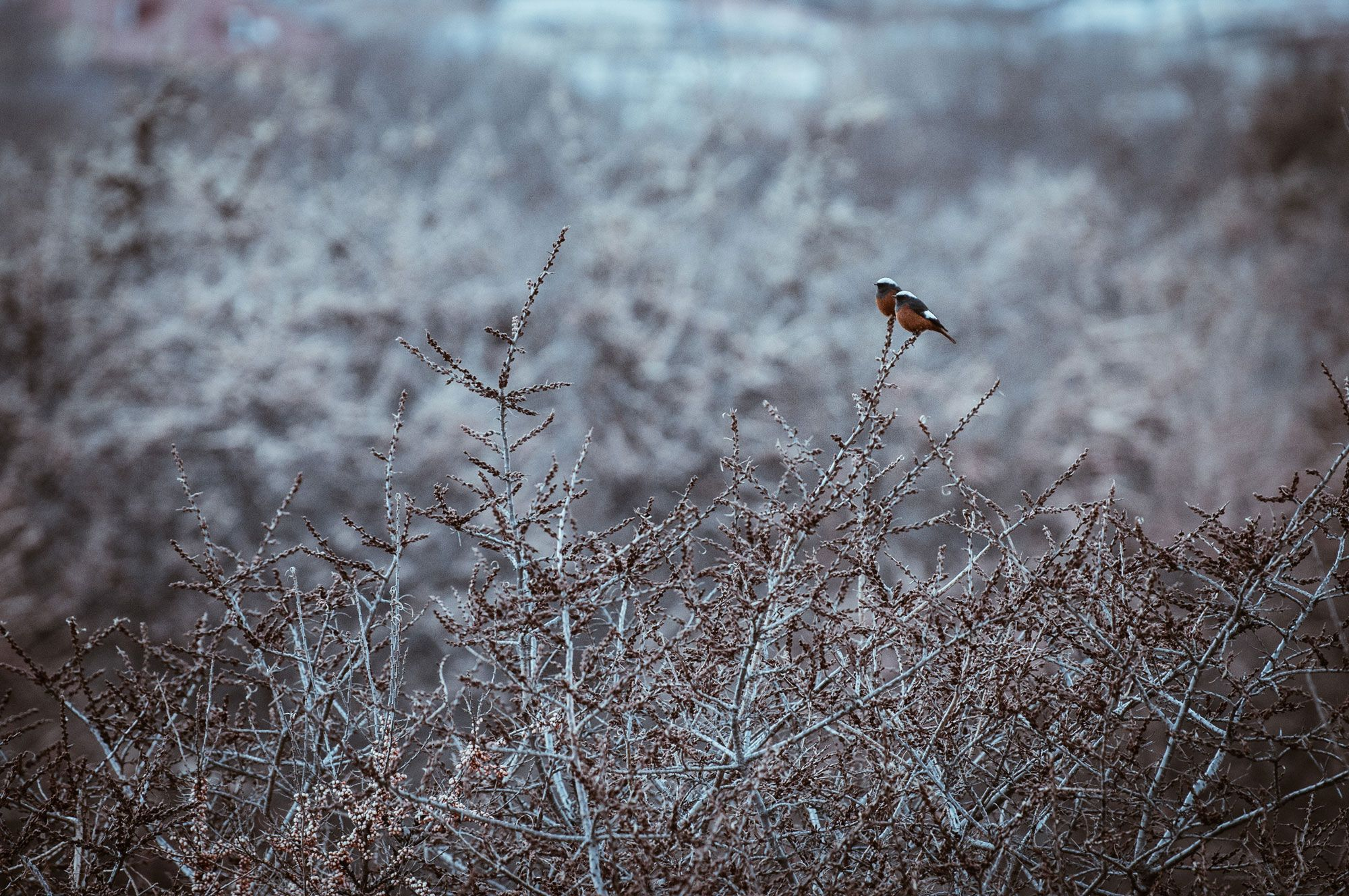 Genuss im Kaukasus – Wintertrekking in Georgien